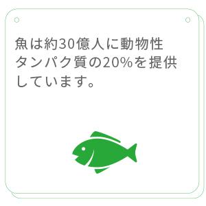 魚は約 30 億人に動物性タンパク質の20%を提供しています。わずか10の魚種で海洋捕獲漁業の漁獲高の約30%を占める一方、養殖漁業生産の約50%も10種で占められています