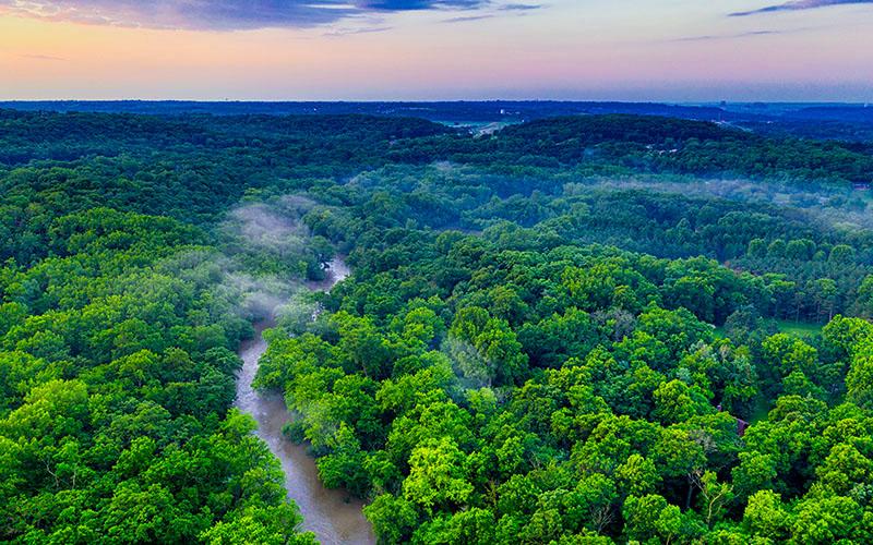 熱帯雨林の森林